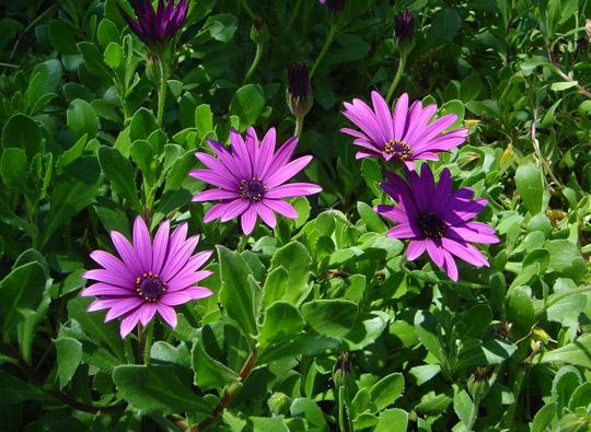 Полевые цветы и аборигенные растения