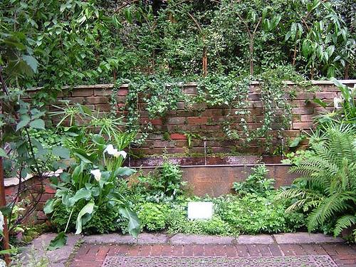 Сад mist placed затуманенный сад