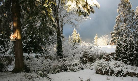 Пульсинфо идеи для зимних пейзажей