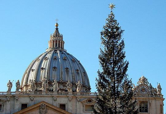 Рождественскую ель для Ватикана привезли из Бельгии