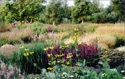 for Piet oudolf planting schemes